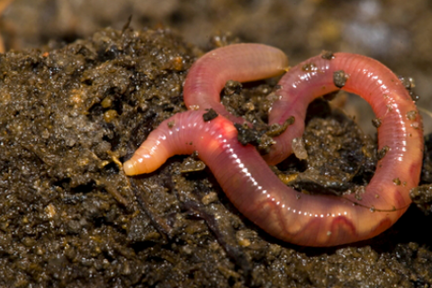 Worm on top of dirt
